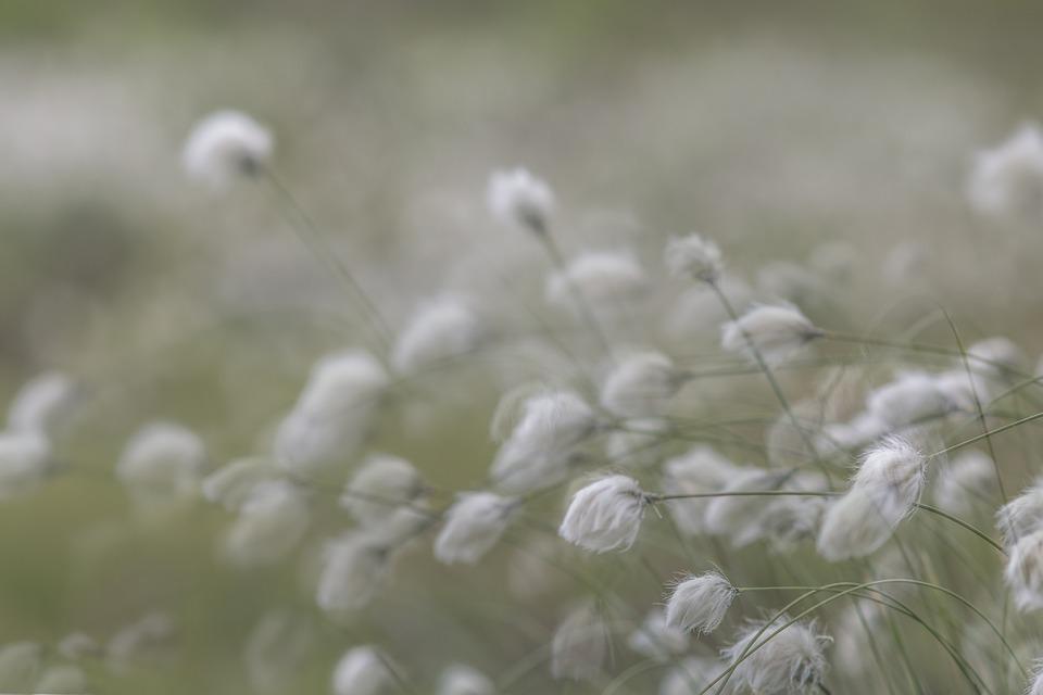 L'Esposizione Multipla, Ricordi, Palude, Fiore, Soft