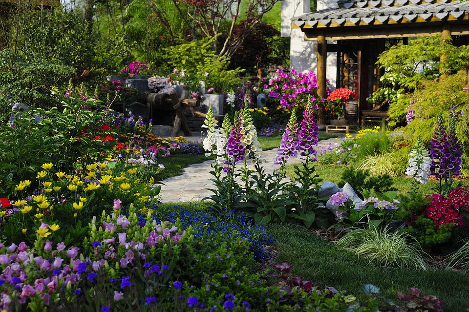 Garden, Yard, Courtyard, Back Garden, Flowers, Grass