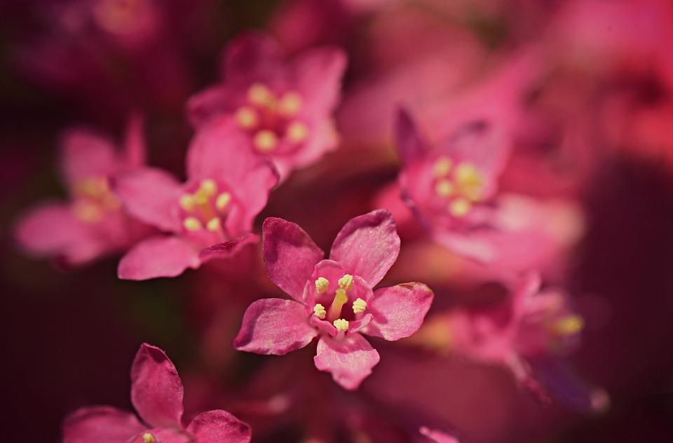 Flower, Pistil, Stamen, Petal, Branch, Tree, Blossom