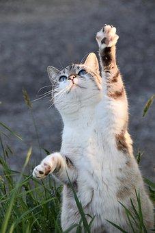 猫, 子猫, ネコ, 商品のクラウド, 猫のバランス, 自然, ハンター猫