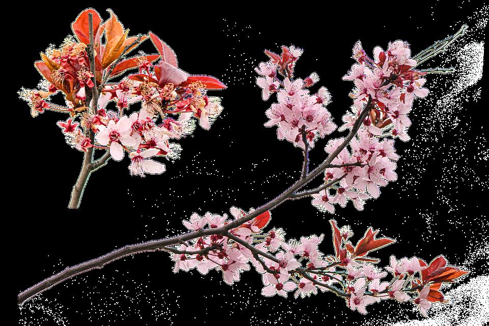 花 ブルーム 春 Pixabayの無料画像