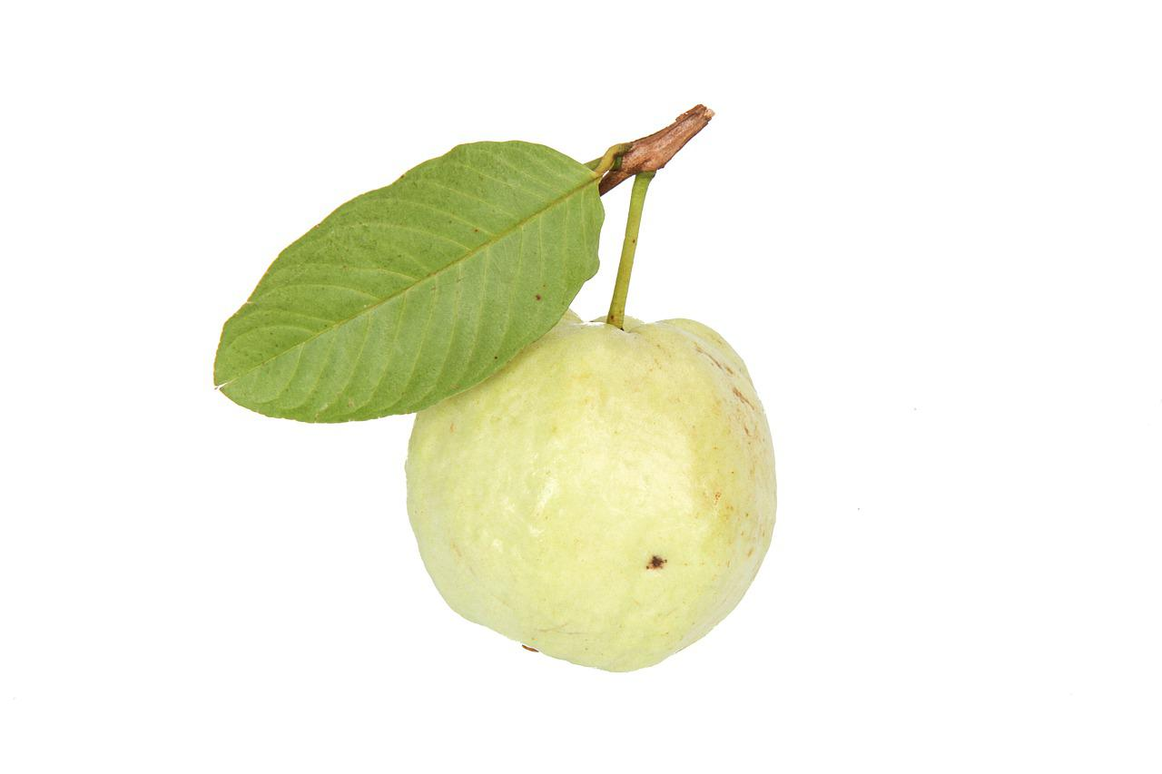 Advantages and disadvantages of guava in pregnancy