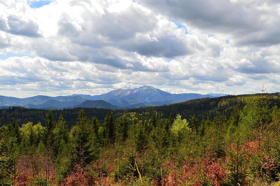 下山, 山, 低いオーストリア, スキー場, スプリング, 滑走路, 雪山, フォレスト, 木, 雲, 曇り