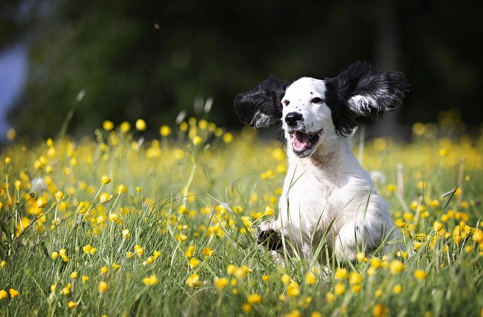 Pup, Puppy, Dog, Animal, Cute