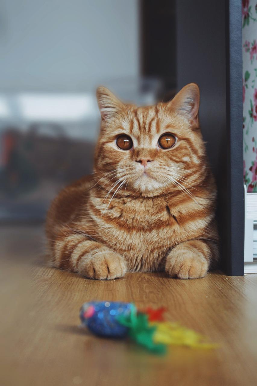The Top 5 Cat Kicker Fish Toys