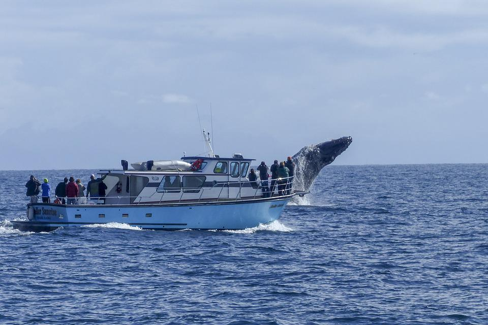 Mirissa whale watching