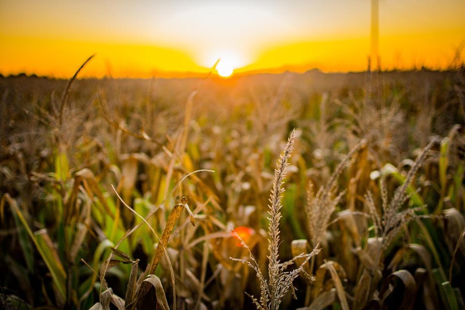 Практичні рекомендації із запобігання і протидії аграрному рейдерству