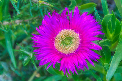 Flower, Spring, Garden, Prato, Bloom