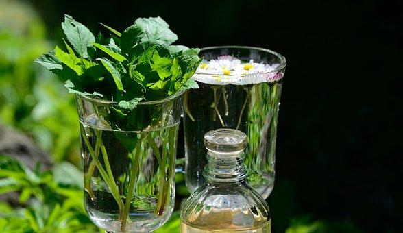 Giersch, 庭のハーブ, 薬効があるハーブ, 健康, 庭, デイジー