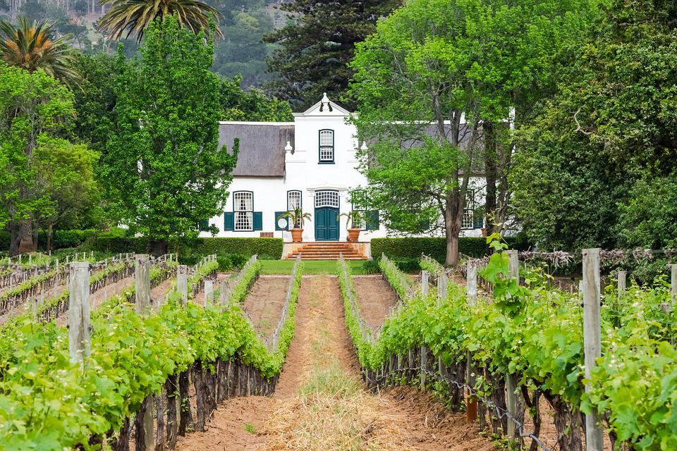 Capetown Winelands