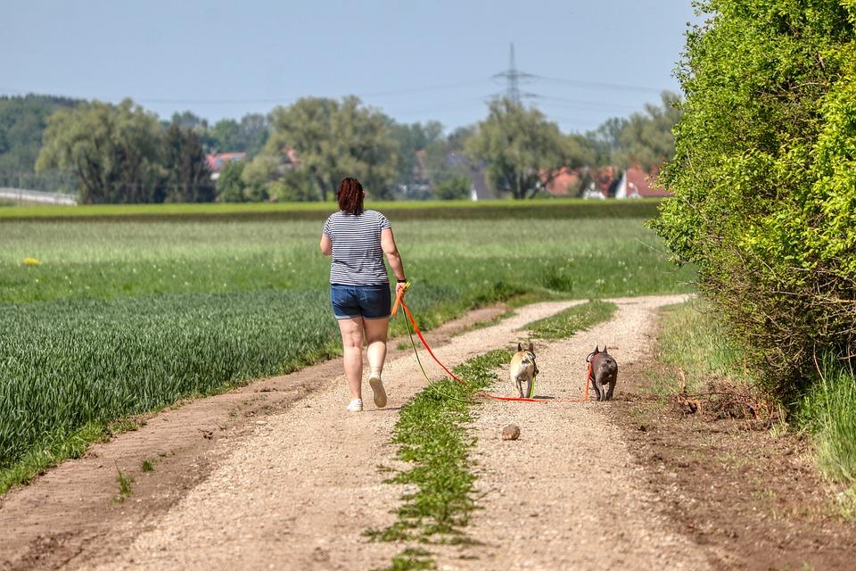Walk, Dogs, Education, Away, Leash, Lane, Comrade
