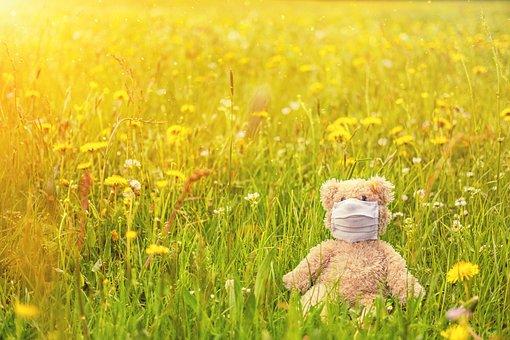 Wiese, Frühling, Frühjahr, Blühen