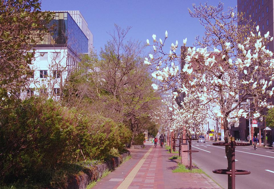 Street, Magnolia, Outdoors, Trees, City, White, Road