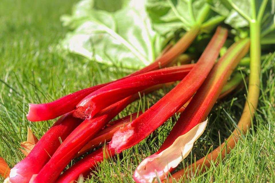 Rhubarb, Fruit, Spring, Nature, Leaves, Green, Summer