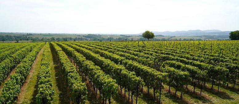 Wijngaarden Foto's - Download gratis afbeeldingen - Pixabay