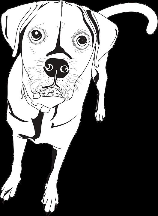 Chien Dessin Au Trait Chiot Animal Images Vectorielles Gratuites Sur Pixabay