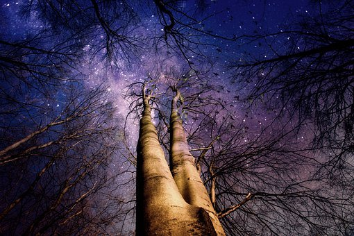 Wald, Bäume, Mystisch, Licht, Stimmung