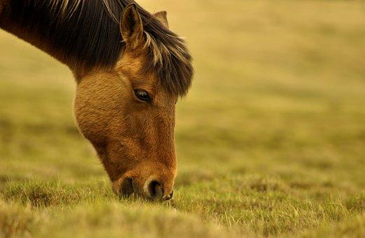 Лошади травоядные
