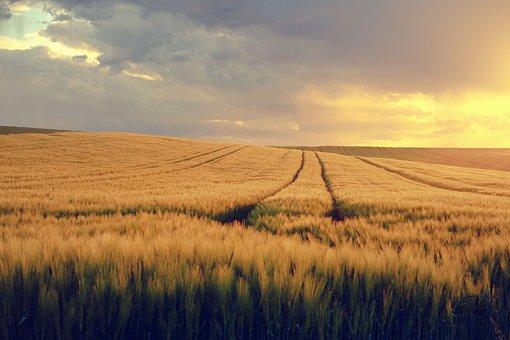 如何寻找农业在创新及新技术领域的机遇?