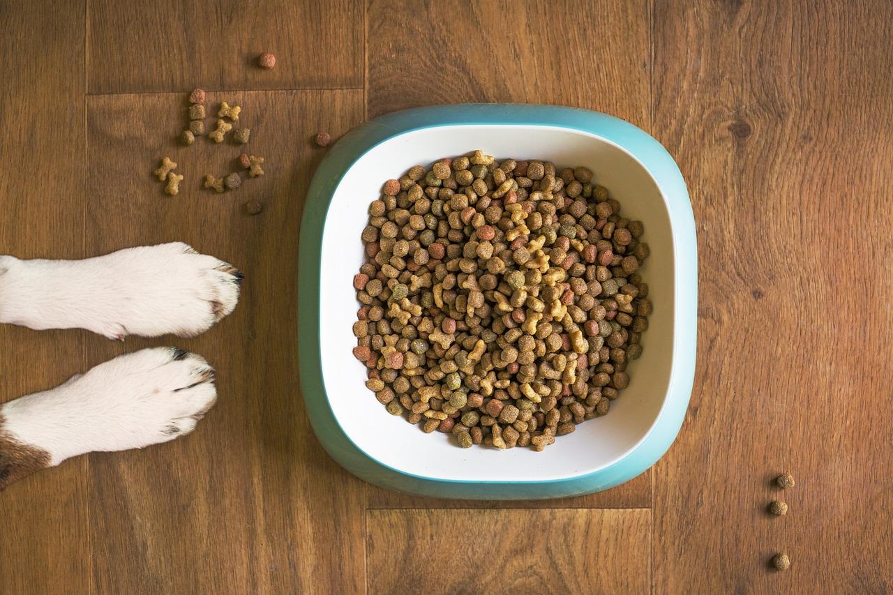 犬のアレルギー対策ドッグフードの人気おすすめランキング10選【無添加・国産など】のサムネイル画像