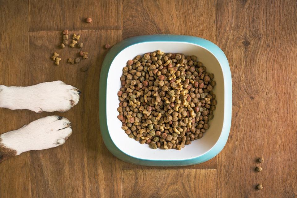 Cibo Per Cani, Ciotola Del Cane, Cane Crocchette