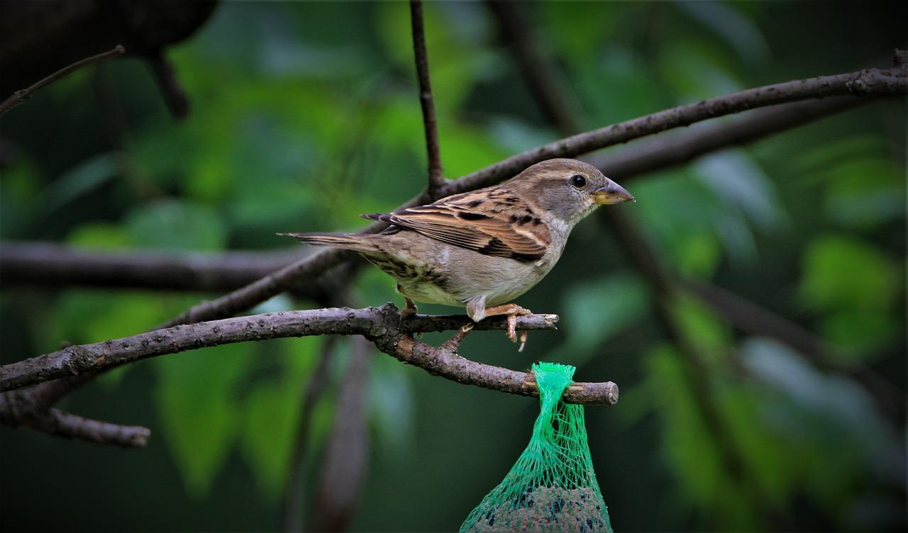 певчие птицы украины фото идет палаты