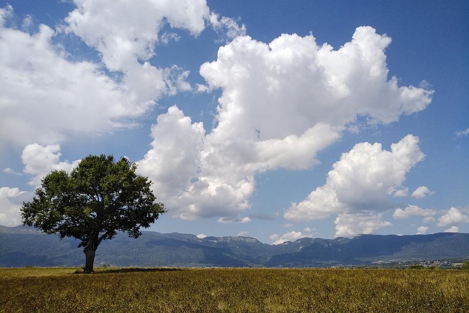 Treet Natur Landlig Gratis Foto Pa Pixabay