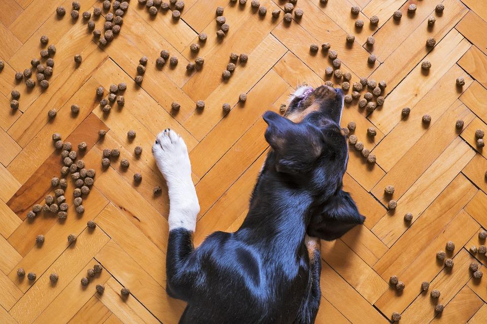 Dietas personalizadas para tu mascota, ¿merece la pena?
