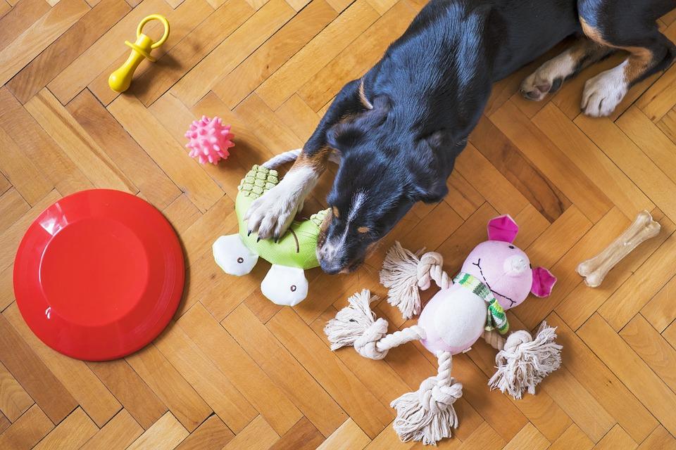 Dog Toys, Dog Playing, Dog Chew Toy, Dog Frisbee
