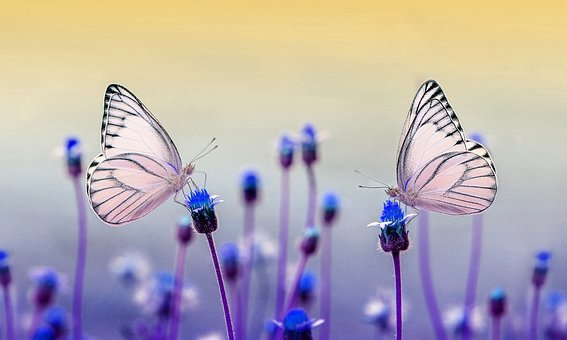 Butterfly, Nature, Animal, Flower
