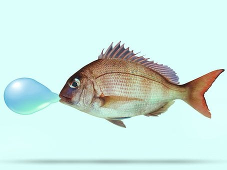 Fish, Snapper, Blow, Ballon, Manipulated