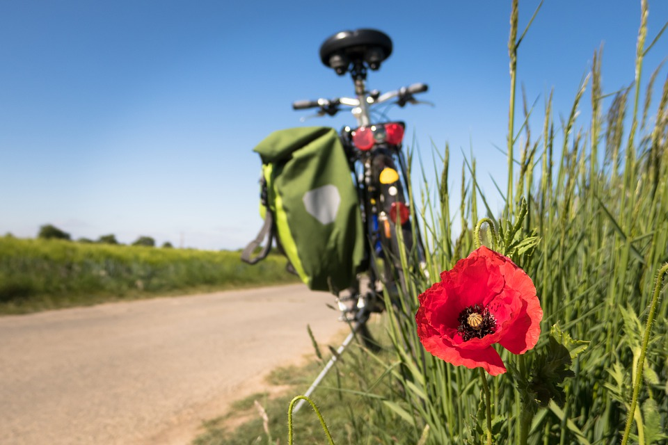 Cycling, Poppy, Leisure, Bike, Cycle Path, Bicycle Path