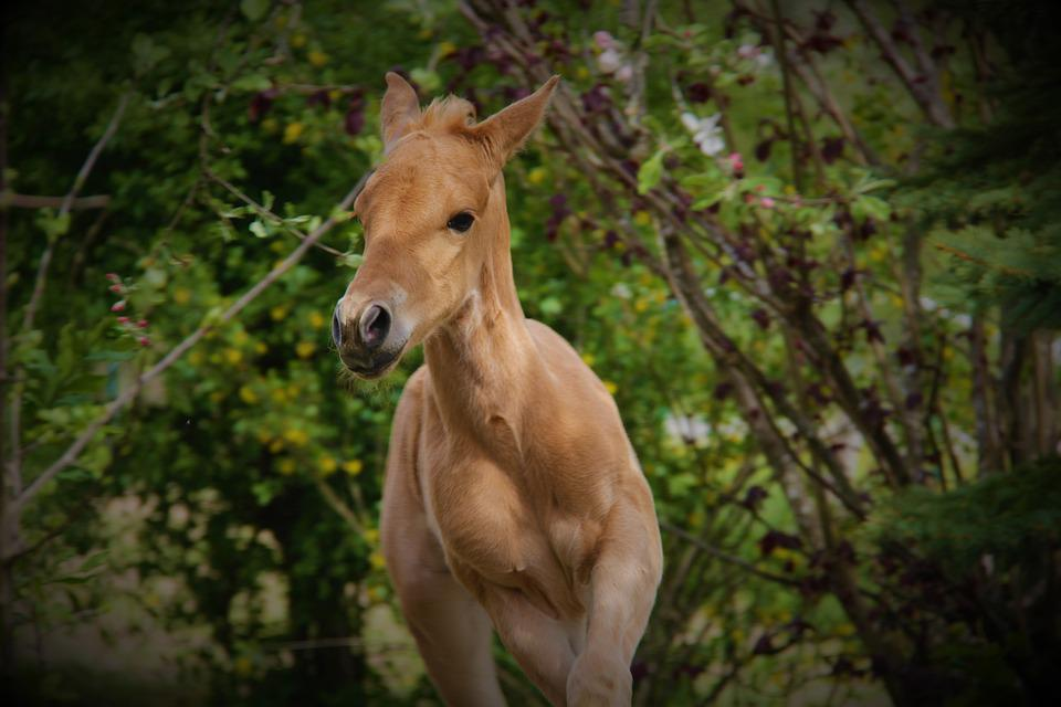 Horse, Foal, Horses, Animal, Mare, Nature, Mammal, Pony