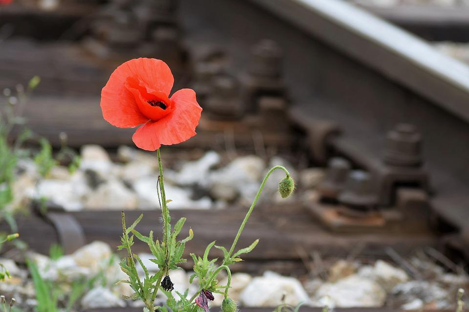 One Red Poppy, Compassion From Nature, Tragedy Place