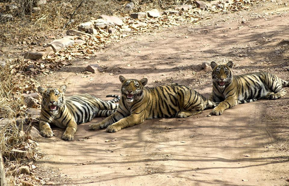 La vie sauvage en Inde