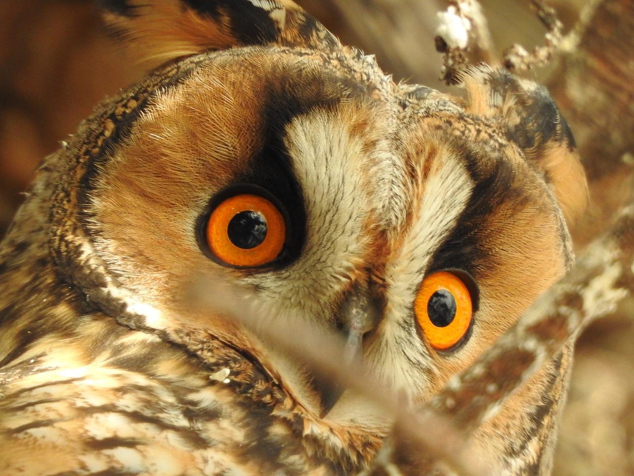 owl-5188242_1280.jpg