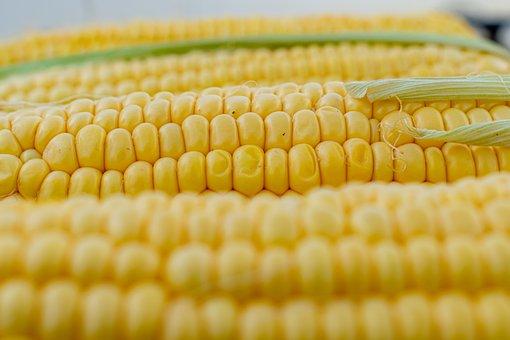 トウモロコシ、穂軸位置とうもろこし、黄、グリル、野菜