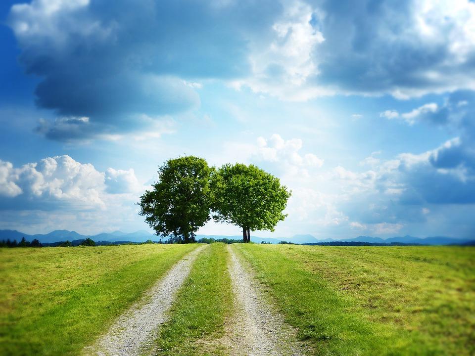 離れた, 車線, 木, 空, 雲, 2 つの, 一緒に, ターゲット, 自然, 自然保護, 環境保護, 希望