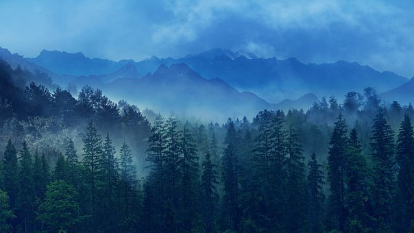 Landscape, Nature, Forest, Mountains