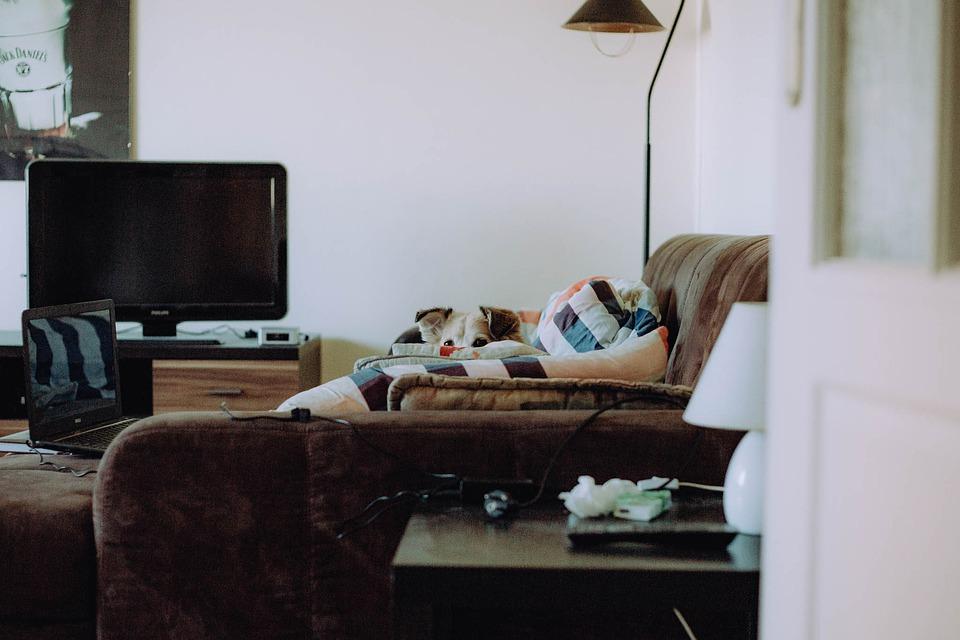 Pokój, Pies, Zwierzę, Sofa, Kanapa, Szczeniak, Schować