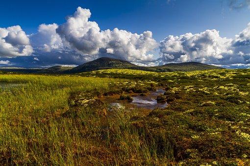 Landschaft, Berg, Sumpf, Wasser, Heather