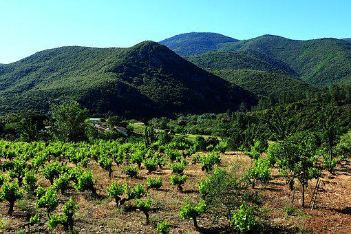 Landscape, Nature, Mountain, Vineyard