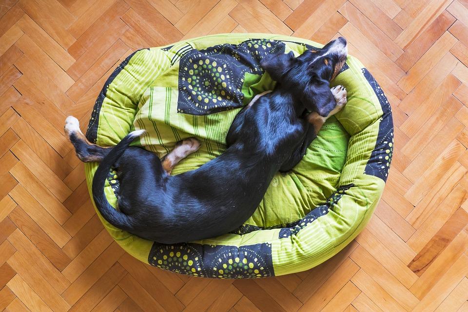 Hund Sove, Dog Hviler, Sovende Hvalp, Hund Bed
