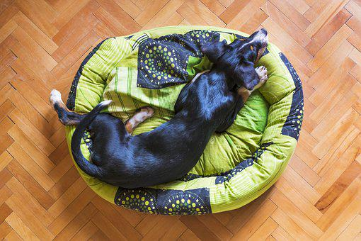 Dog Sleeping, Dog Resting