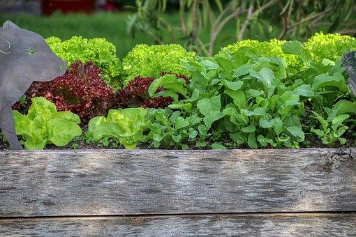 Garten, Salat, Hochbeet, Ernährung