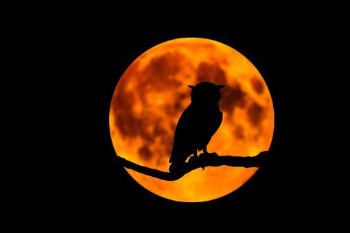 Owl, Moon, Night, Branch, Tree