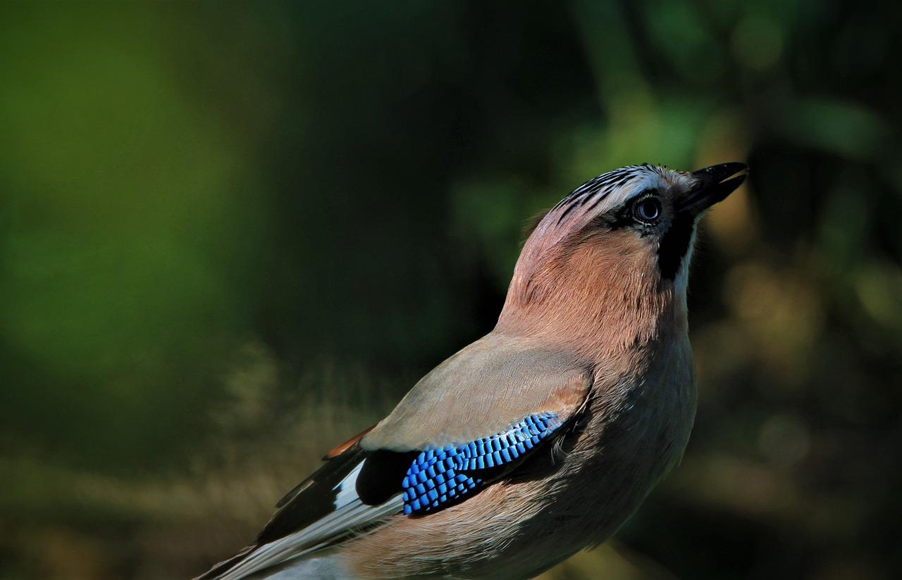 певчие птицы украины фото они диких