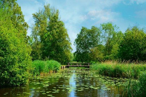 Waterway, Bridge, Vegetation, Tree