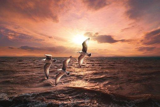 Landscape, Sea, Sunset, Seagulls, Sky