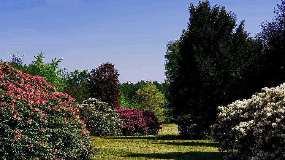 Rhododendronpark in Dresden - Wachwitz